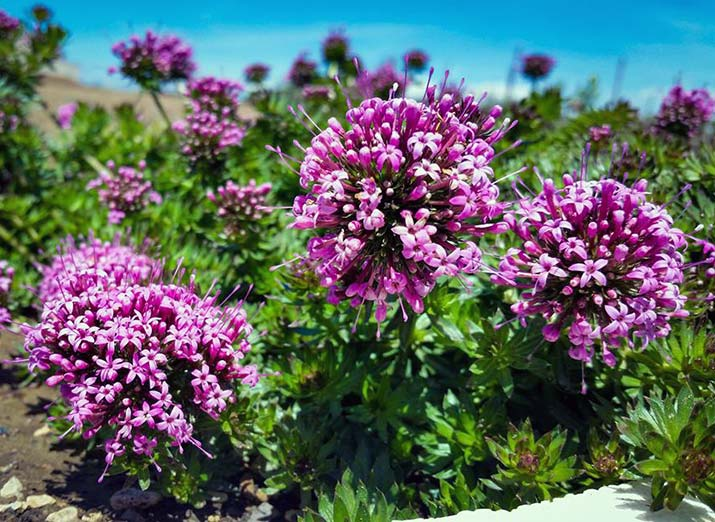 Piante Mediterranee Selvatiche : Vivaio piante mediterranee tarquinia viterbo