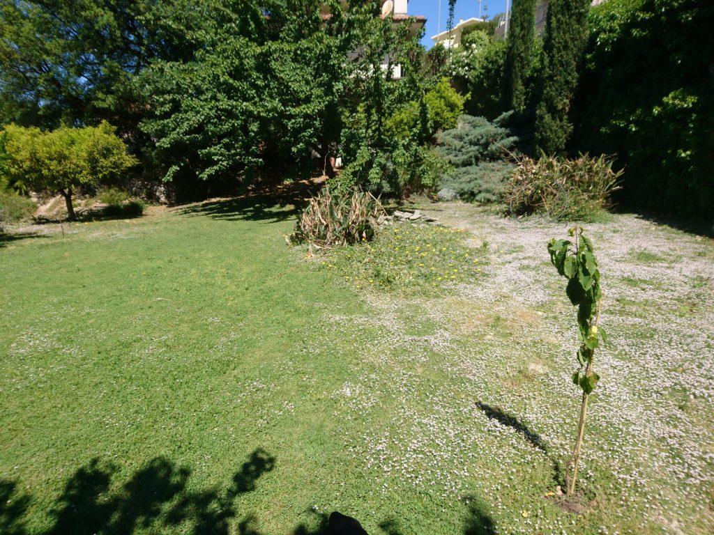 Lippia Nodiflora Prato