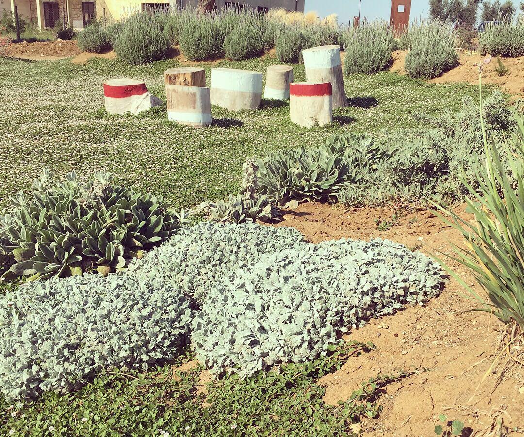 Favorito Giardino Sperimentale » Vivaio 98.3 Piante Mediterranee  CT11